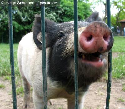 """""""Killerschweine im Weltall"""" gewinnt goldene Filmrolle"""