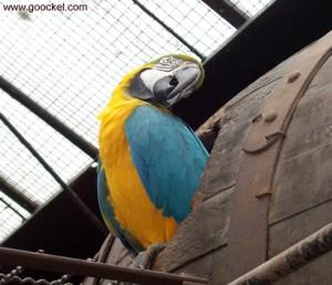 Papagei beleidigt Besucher